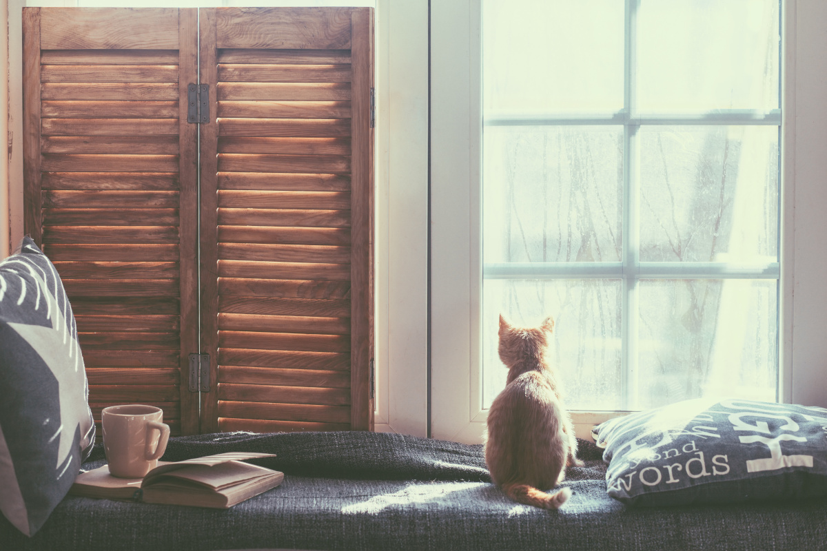 Cat sitting at a window to symbolize isolation